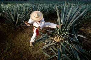 beste plaatsen om te bezoeken in Mexico-stad Tequila Jalisco