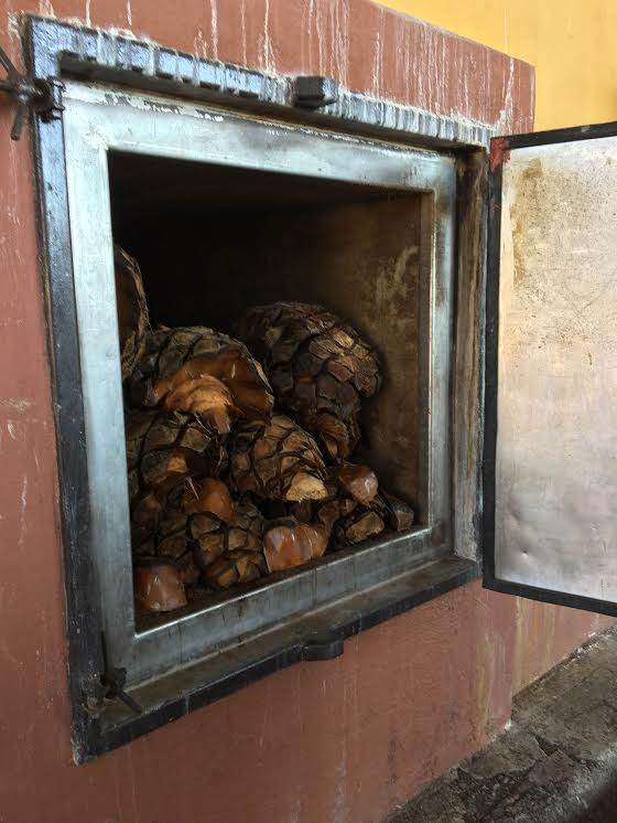 Hornos usados para cocer la Piñas del Agave en el proceso de la Fabricación del Tequila Herradura