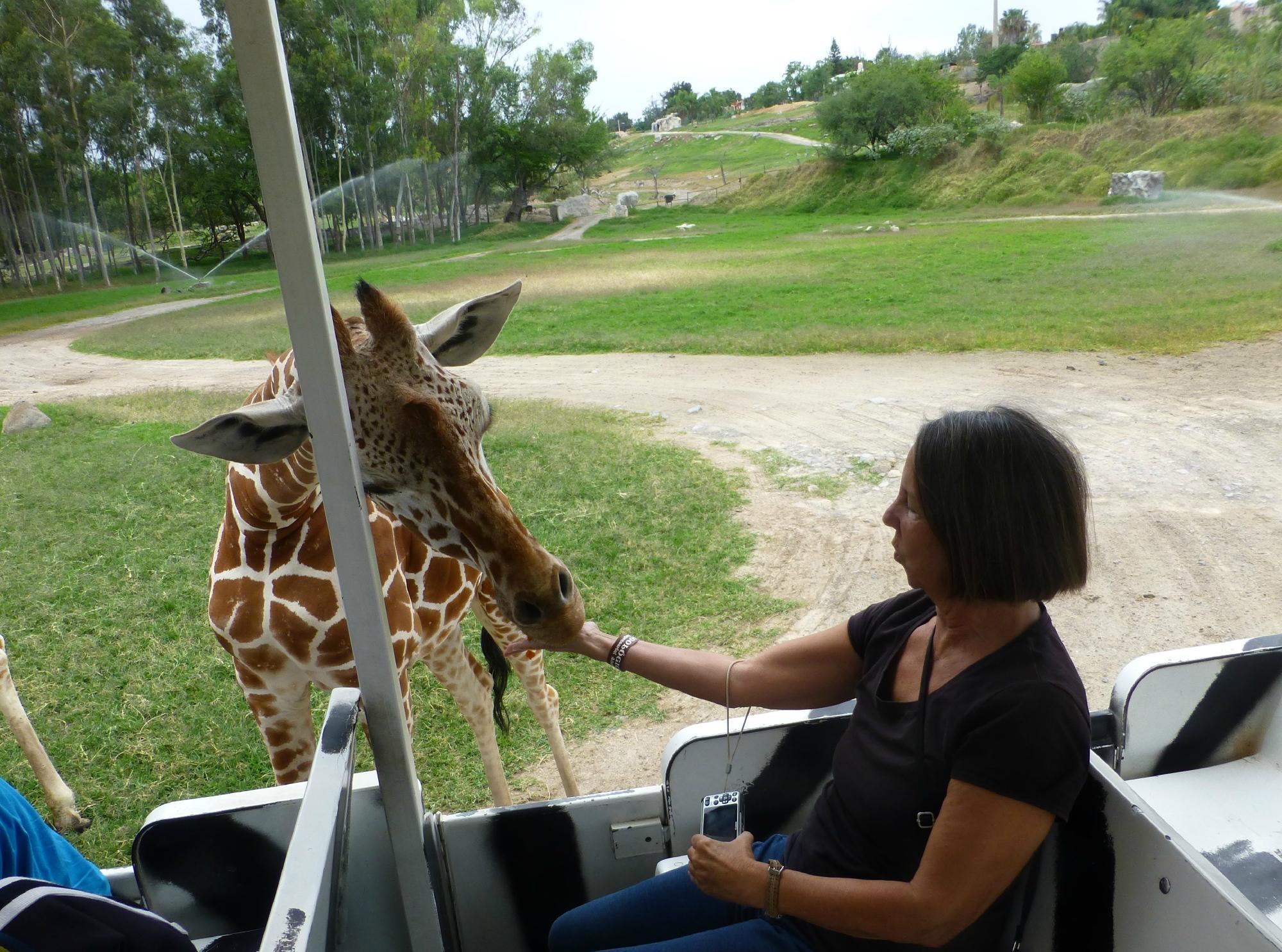 Atracciones principales del Zoológico Guadalajara