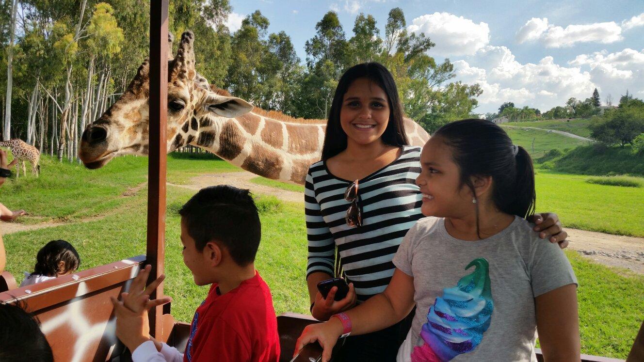 Jarafas en Safari zoologico Guadalajara