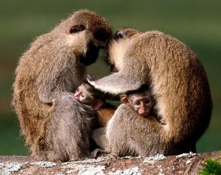 Monkeyland Zoológico Guadalajara