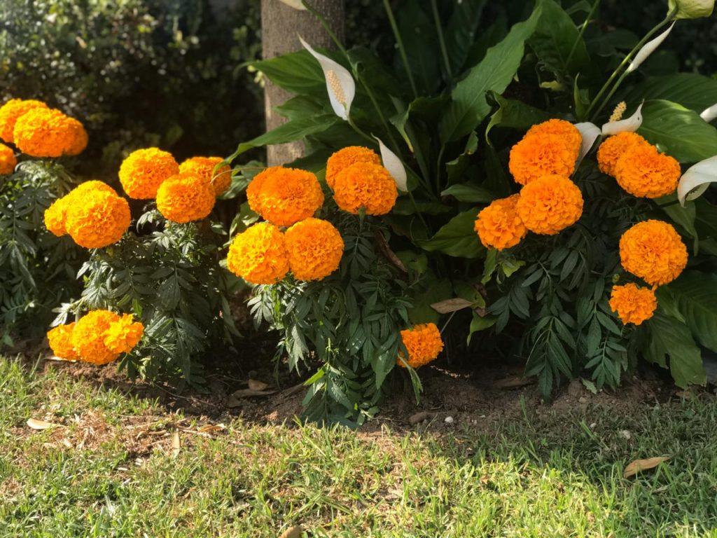 Flores Tradicionales y costumbres de Guadalajara jalisco México