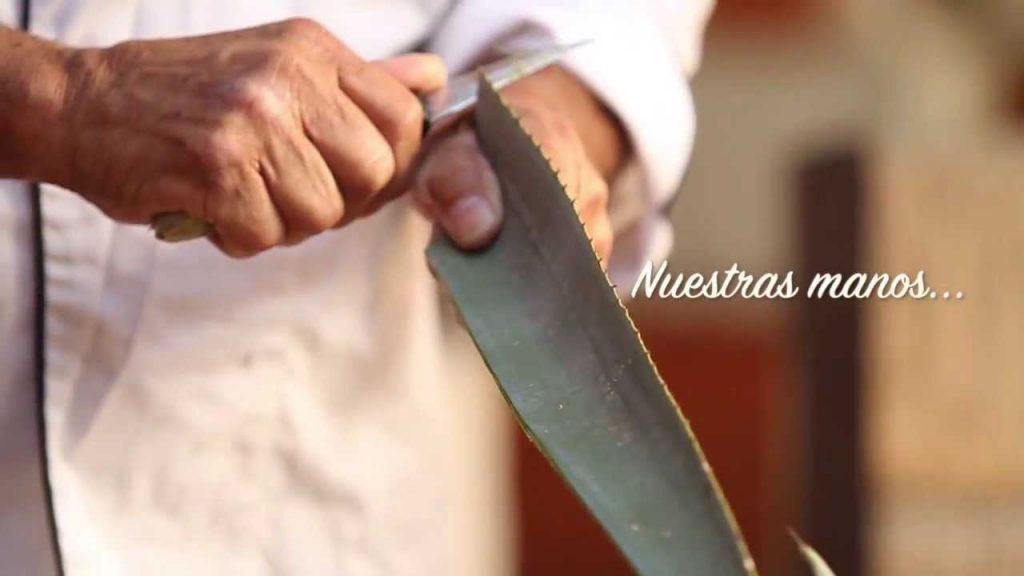 Comida típica de Guadalajara presente un Alambre de Carne al Tequila o Camarones marinados y posteriormente sazonados con Tequilas extra añejos y enganchados en una hoja de agave azul.